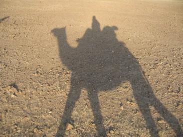 Camel Trek 2 e1270650482500 Majestic Rajasthan
