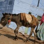 Walking the blue city streets of Jodhpur
