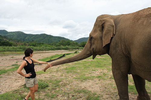Making friends with rescued elephants at Elephant Nature Park