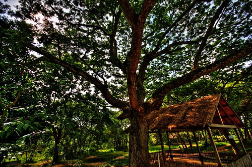 Tree Cambodia Remembers: A Day at the Killing Fields