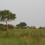 Marshland envelops Moremi Game Reserve