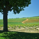Vineyard views in South African wine country