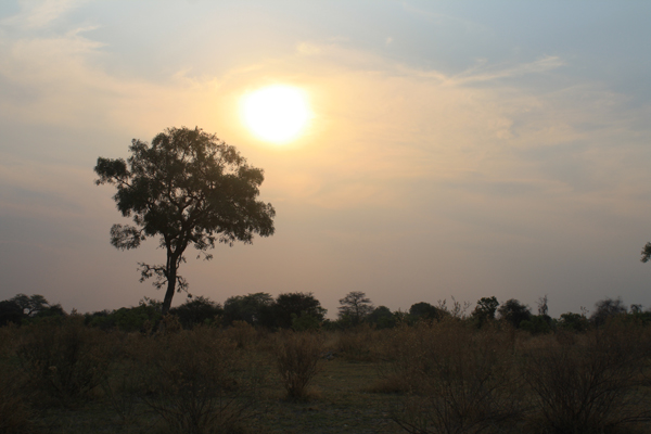 Sunset over Moremi Game Reserve