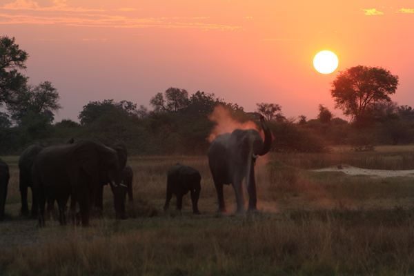 Elephants fill the horizon against the unrivaled African sunset