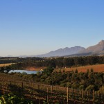 Afternoon lights falls on the vineyards of Stellenbosch, South Africa