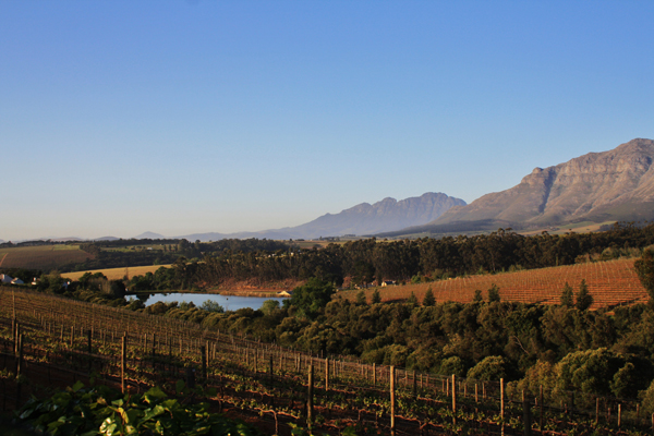 Stellenbosch Vineyards of South Africa South Africa's Winning Winelands