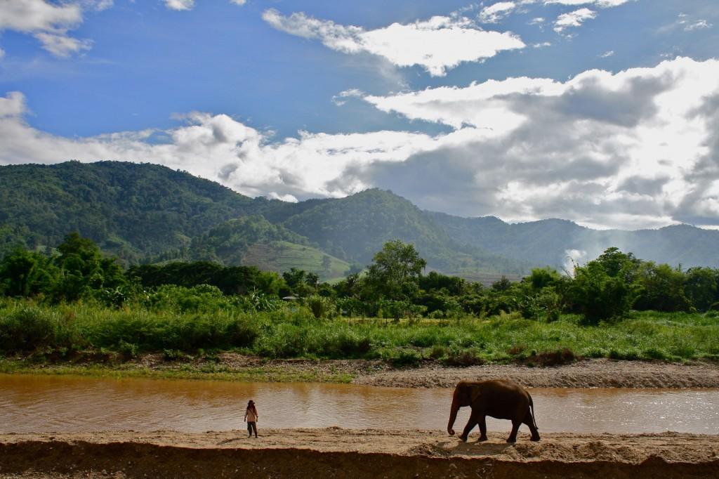 Elephant Nature Park 1024x682 Thailand