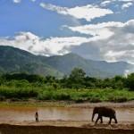 Elephant Nature Park | Chiang Mai, Thailand