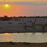 Photo of the Week: Namibian Sunset