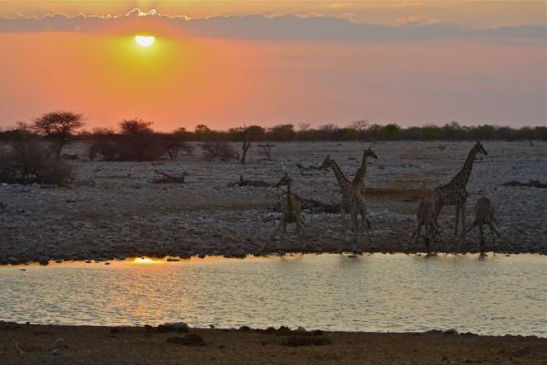 Etosha National Park Namibia e1341263664943 Namibian Sunset
